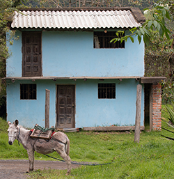 blue house and donkey