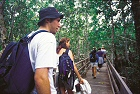 queensland rainforest boardwalk