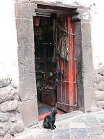 cusco shop and cat