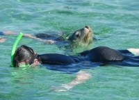 swimming with sea lions baird bay